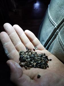 FOC SUN 12/13 Mark Zanella of Zanella Milling holds a handful of buckwheat grain. ERIC FREEHLING/BUTLER EAGL