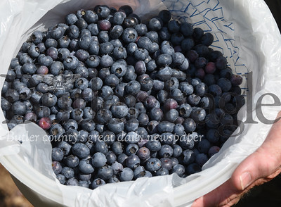 Harold Aughton/Butler Eagle: Bowser's Blueberries, 143 McCalmont Road, Renfrew, opened for the season.