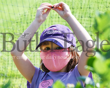 Harold Aughton/Butler Eagle: Lillian Kirchhof, 7, of Cranberry Twp. spent Monday morning picking blueberries with her parents AManda and Chris Kirchhof at Bowser's Blueberries in Renfrew.