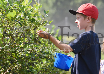Harold Aughton/Butler Eagle: Jackson Cadarette, 8, picked blueberries with his sister, Makenna, 5, and mother, Sarah Cadarette at Bowser's Blueberries in Renfrew Monday morning. July 6, 2020.