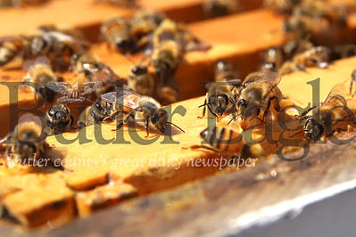 Bees work one of the hives at the Cranberry Highlands Community Apiary. Seb Foltz/Butler Eagle 07/19/20