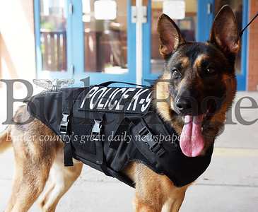 Harold Aughton/Butler Eagle: Rico, Butler Police Dog, dones his new protective vest thanks to the donation of Corina Diehl, president/ceo of the Diehl Automotive Monday, July 27, 2020.