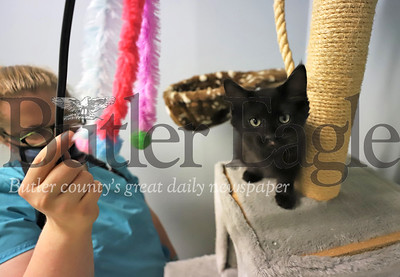 (EDITORS NOTE: FOCUS A LITTLE SOFT RUN SMALLER) Butler County Humane Society's Rebecca Morrow plays with 'Crow,' one of the shelter's kittens, Friday. Seb Foltz/Butler Eagle 06/26/20