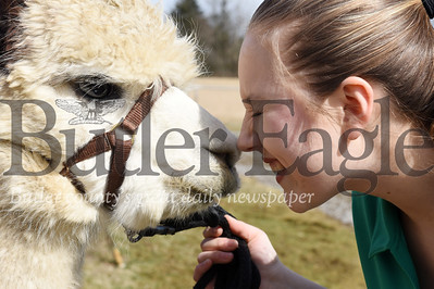 Harold Aughton/Butler Eagle: Jillian Ranko the new president of the PA 4-H State Council rubs noses with her pet alpaca, Aspin Thursday, March 5, 2020.