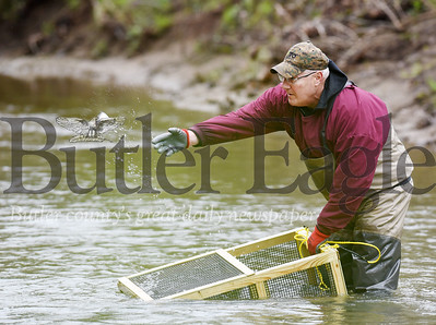 Harold Aughton/Butler Eagle: Harold Aughton/Butler Eagle: Rodger Davis of Butler, releases a rainbow trout into Thorn Creek, Wednesday afternoon, May 6, 2020. The trout were raised in aquatics lab at Chatham University's Eden Hall Campus by professor Roy Weitzell, the director of the lab.