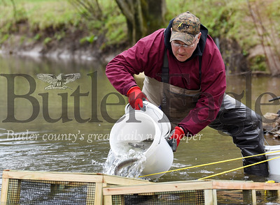 Harold Aughton/Butler Eagle: Rodger Davis prepares to release the trout raised by professor Roy Weitzell, director of the aquatics lab at Chatham University's Eden Hall Campus Wednesday afternoon, May 6, 2020.