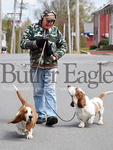 gary nestor - basset hounds