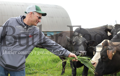 Leroy Bergbigler hands his cows some fresh grass from the other side of the electric fence at Bergbigler Farm. Seb Foltz/Butler Eagle