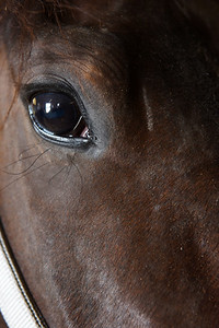 Eye of a champion. Jessie, Jess or Jessica ran one of the fastest races in the Johnston Stables this year in a time of 1:54 seconds. Harold Aughton/Butler Eagle