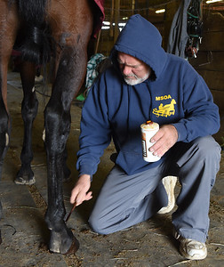 Gary Johnston places ball joint on the ligaments of one of his horses after a training session. Harold Aughton/Butler Eagle.