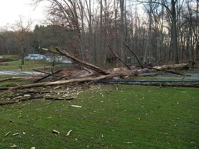 Jim Smith photo. Two huge trees blew down onto Sarver Road in Winfield Township on Sunday afternoon, shearing off a utility pole and downing wires, and causing apparent minor damage to the home of Frank and Rosan Harbovsky. Electrical service was lost at homes in the area.