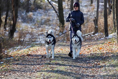 Paula VanOrder of Cranberry walks her dogs Athena (right) and Zeus on the new dog trail at Cranberry's North Boundary Park. Township officials and dog lovers held a ribbon cutting for the new trail Saturday. Dogs were previously not allowed anywhere in the park. Seb Foltz/Butler Eagle