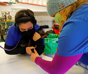 (PHOTO FOR FILE OR STANDALONE) Veternarian Ang Morgan(right) and Erica Daniels of the Spay Neuter Clinic vaccinate a dog during the Butler Humane Society's vaccination day at Alemeda Park Sunday. Seb Foltz/Butler Eagle 10/18/20