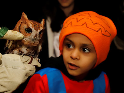 Audubon Society of Western Pennsylvania education director Chris Kubiak shows a screetch owl to Saad Ghamdi, 5, and other guests at Succop Nature Park's Creatures of the Night event Saturday. Seb Foltz/Butler Eagle 10/24/20