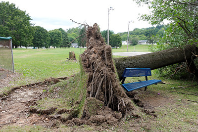 Downed oak tree at Father Marinaro Park. Seb Foltz/Butler Eagle  (Sept. 1 2020)
