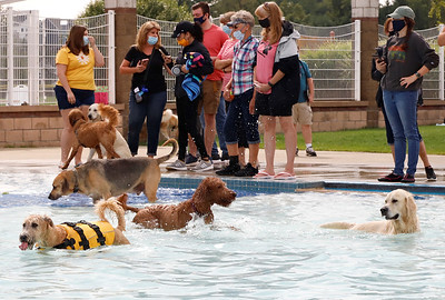 Dogs and owners enjoy a day at the pool at Cranberry's annual puppy plunge Saturday. Seb Foltz/Butler Eagle 09/12/20