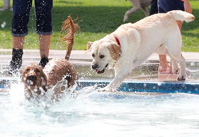Cranberry pool puppy plunge 2020. Seb Foltz/Butler Eagle 09/12/20