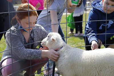 Children pet a baby sheep at Winfield Township's Easter Egg Hunt Saturday. Seb Foltz/Butler Eagle