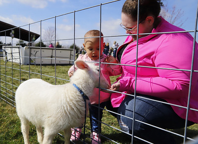 """Stella Mugo,1, meets """"Mr. Sheep"""" a two month old lamb with her mother at Saturday's Winfield Township Easter Egg Hunt. Seb Foltz/Butler Eagle"""