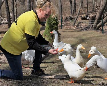 Holly Mead feeds her magazine model duck Gertrude. Seb Foltz/Butler Eagle 03/30/21