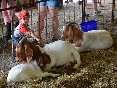 A toddler pets a trio of goats at the Big Butler Fair on Thursday. Considered the largest agricultural fair in western Pennsylvania, the event end this weekend. ANDIE HANNON/BUTLER EAGLE