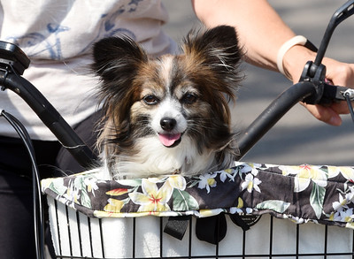 Retirees Barb and Dave Wagner of Butler took their 7-year-old Papillion, Lucy for a bike ride through Alameda Park Wednesday morning. April 7, 2021. Harold Aughton/Butler Eagle.