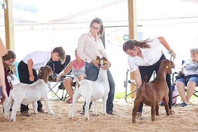 Butler Farm Show Goat Judging Contest