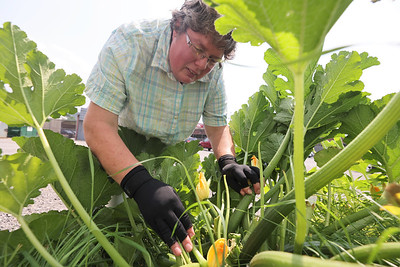 Betty Paugh of Oesterling's Lawn & Garden checks on the shop's zucchini plant Thursday. Seb Foltz/Butler Eagle 07/29/21