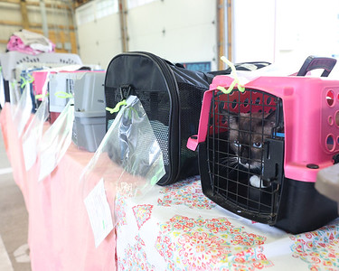Cats waiting to be released or picked up by their owner following spay, neutering and other vet testing through the Community Cat Network Thursday at the Butler City Farmers Market. Seb Foltz/