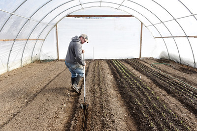Ben Trew of Sweetwater Farms prepares the soil in a high tunnel greenhouse in Adams Twp., where he has planted lettuce, arugula, spinach and beets. Harold Aughton/Butler Eagle.