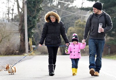 Renji, a 9-week-old, Pembroke Welsh Corgi, went for a walk with his family, Nicolle Hebrank, Liliana, 3, and Michael Knecht and along West Penn Street in Butler Monday morning, January 11, 2021. Harold Aughton/Butler Eagle.