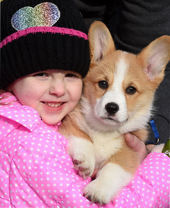 Liliana Knecht, 3, of Butler holds her new puppy, Renji, a 9-week-old, Pembroke Welsh Corgi. Monday January 11, 2021.  Harold Aughton/Butler Eagle.
