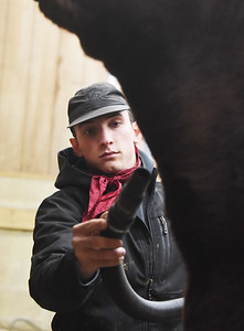 Matt Powers, a herdsman for Armstrong Farms, blow dries Cumberland, a one-year-old shorthorn cow, in preparation for a show in Virginia this coming weekend. Wednesday, January 27, 2021. Harold Aughton/Butler Eagle.