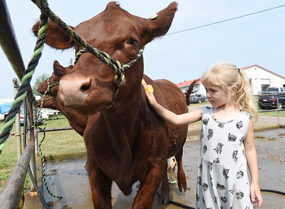 Charlotte Welsch, 5, of Center Twp. helps her mother, Shannon Welsch, of White Birch Farms, prepare Rosmaree, a 6-month-old, Short Horn cow for competition. Harold Aughton/Butler Eagle.