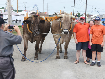 Security guard Carol Schaub takes a photo of the Ober family, from left, Eli, Valerie and Eric with Yule, a Brown Swiss cross and Lee, a pure Brown Swiss Ox. According to the owner, Doug Drewes, the Brown Swiss Oxen are the largest in the United States. Harold Aughton/Butler Eagle.