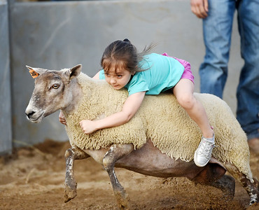 Hattie Barthel, 4, of New Boston, Texas hangs on tight during the Mutton Busting contest as part of Bullride Mania at the Big Butler Fair Saturday, July 3. Hattie's father, Patrick Barthel, is a machinist at Shell's Cracker plant in Monaca. The grandstands were full Saturday night for Bullride Mania at the Big Butler Fair. Events included bull riding, barrel racing and mutton busting.  Harold Aughton/Butler Eagle