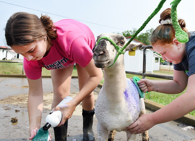 Rebeccah Rodgers, 16, left of Penn Twp., and her friend, Jojo Shuler, 12, of Fenelton, prepare Kevin, a Hamp cross Ewe for the Junior Showmanship Class at the Big Butler Fair Monday morning. Harold Aughton/Butler Eagle.