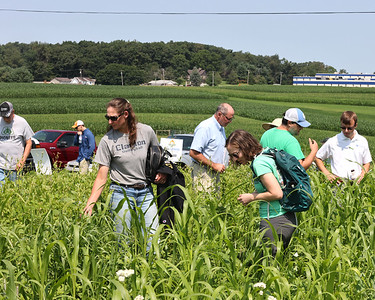 Penn State doctoral student Emma Rice (right), Titusville area farmer Monica Kerr(left) look at a cover crop test plot during the Pennsylvania No Till Alliance's field day conference at Thiele Dairy Farm in Cabot. Area farmers attended the farm day to learn about no till farming practices designed to maintain soil fertility and manage rain runoff. Seb Foltz/Butler Eagle 07/23/21