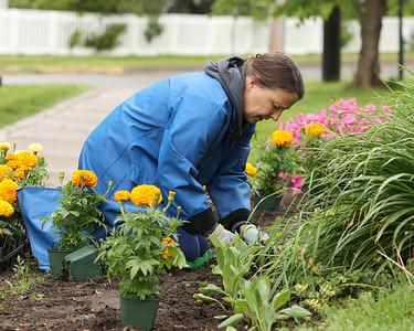 Jennifer Keller-Birkes plants flowers in Slippery Rock Memorial Park Saturday along with volunteers from the Slippery Rock Rotary's Slippery Rock in Bloom group. Seb Foltz/Butler Eagle 05/29/21
