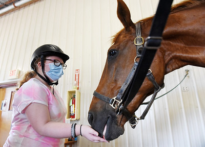 Julie Kubit of Cabot feeds Sox, a 26-year-old Thoroughbred, at Slippery Rock University's Storm Harbor Equestrian Center, Monday, June 21, 2021. Harold Aughton/Butler Eagle