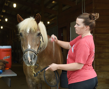 Kelly Gross, assistant director of Storm Harbor Equestrian Center at Slippery Rock University, brushes out the hair of Max, one the center's many horses Monday, June 21, 2021. According to Slippery Rock University's website, Storm Harbor Equestrian Center provides weekly Equine Assisted Activities (EAA) for people of all ages with cognitive, physical, emotional and social disabilities.