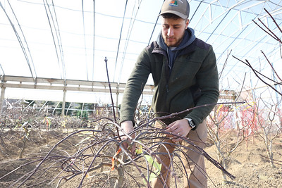 Jason Dambach of Lake Forest Gardens nursery explains how to maintain and prune a Japanese Maple at their tree farm in Fombell. Seb Foltz/Butler Eagle 03/19/21