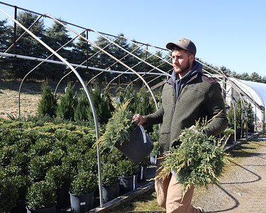 Jason Dambach of Lake Forest Gardens nursery carries shrubs at their tree farm in Fombell. Seb Foltz/Butler Eagle 03/19/21