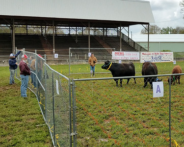 Cow Patty Bingo at Kids Day at the Butler Farm Show Saturday. 05/08/21 Eric Freehling/Butler Eagle