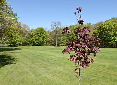 Tree planted on the 13th fairway in memory of the owner. Saxony Golf Course Harold Aughton/Butler Eagle
