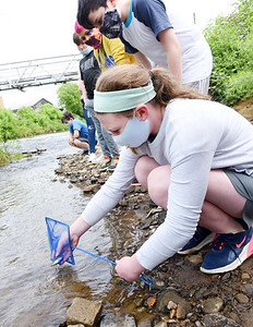 Butler fifth grader Alexis Myers releases a trout into the Connoquennessing creek Thursday afternoon. . The trout was raised in Mr. Dave McCool's class. Harold Aughton/Butler Eagle.