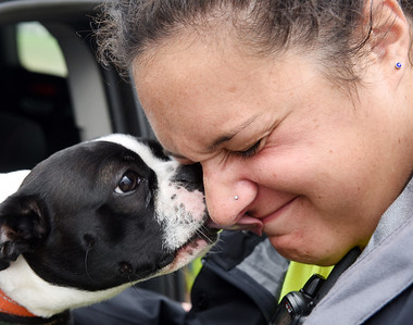 Rachel Martone of the Greater Pittsburgh Community Foodbank received a kiss from Scout, a Boston Terrier, while directing traffic during a food distribution at Lernerville Speedway Tuesday. Harold Aughton/Butler Eagle