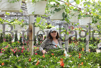 Amy Smith of Brenckle's Farms & Greenhouses waters tropical plants at their greenhouse shope on Evans City Road. Seb Foltz/Butler Eagle 04/02/20