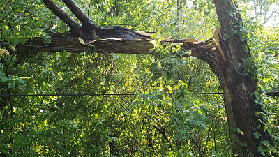 Damage to a tree along Route 68 caused by a storm that went through northern Butler County Tuesday, August 24,2020. The stormer downed trees and wires.Photo by Harold Aughton/Butler Eagle