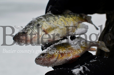 The two men started fishing Thursday around 7 a.m., but had only caught three fish for their efforts by mid-afternoon. Shown are a perch and a crappie they caught. Tanner Cole/Butler Eagle